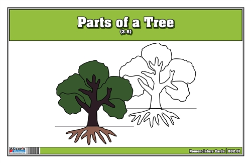 Parts of a Tree Nomenclature Cards 3-6(Printed)