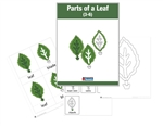Parts of a Leaf Nomenclature Cards (PDF file)
