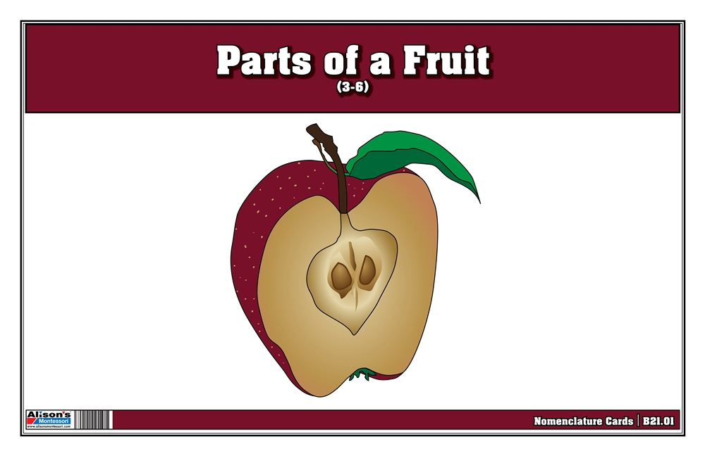 Montessori Materials Parts Of A Fruit 3 6 Printed