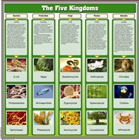 Montessori Materials- The Five Kingdoms Chart  with Cards