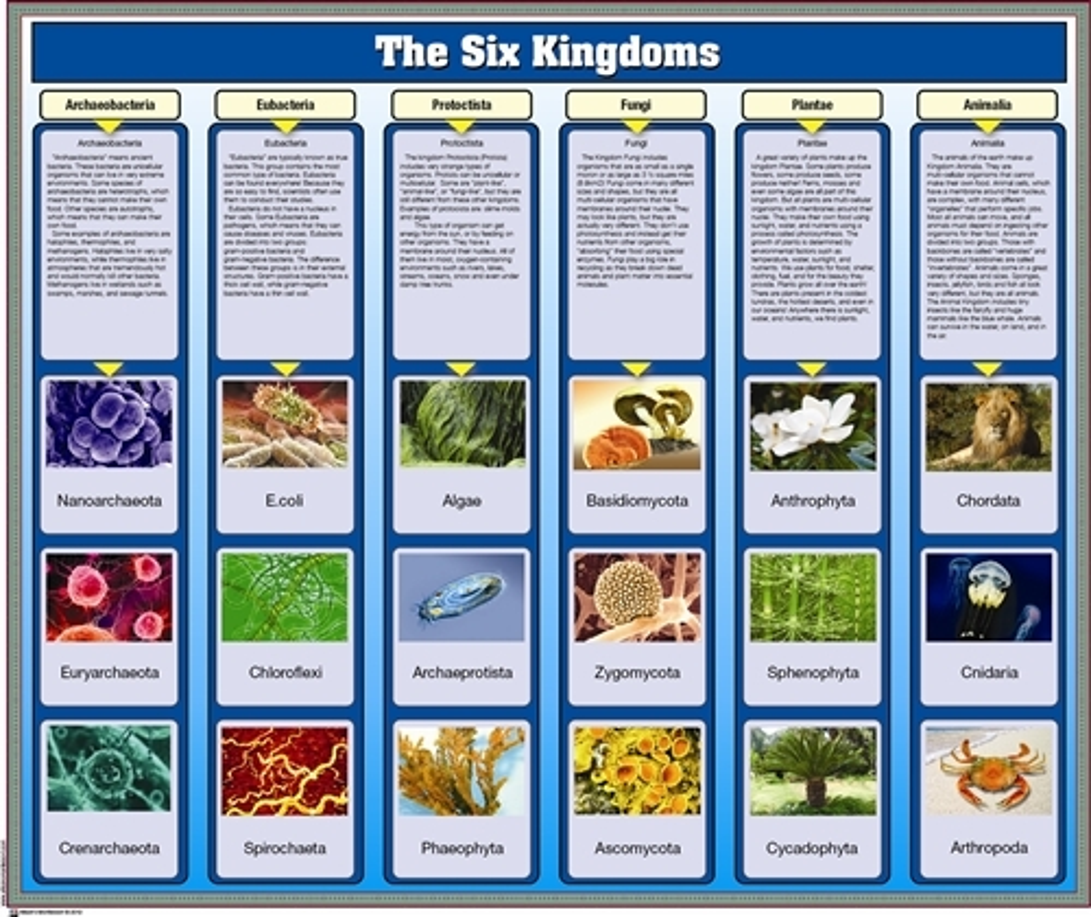 six kingdoms of living things Success
