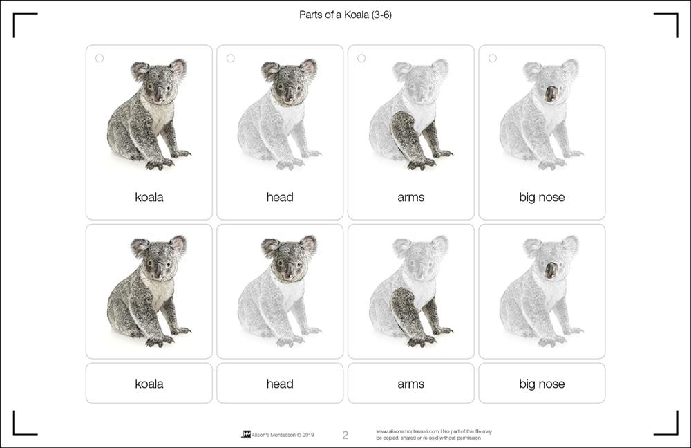 Parts of a koala 3 6 - Koala components ...