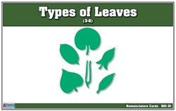 Types of Leaves Nomenclature Card (Printed)