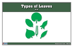 Types of Leaves Nomenclature Cards (Printed) (6-9)