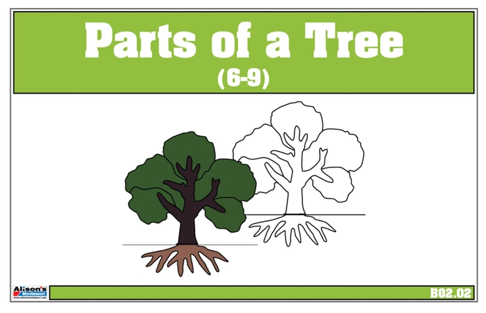Parts Of A Tree Nomenclature Cards 6 9 Printed