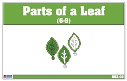 Parts of a Leaf Nomenclature Cards 6-9(Printed)