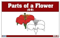 Parts of a Flower Nomenclature Cards 6-9 (Printed)