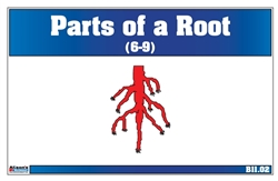 Parts of a Root Nomenclature Cards 6-9 (Printed)