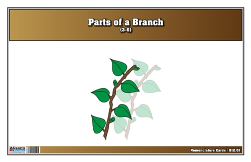 Parts of a Branch Nomenclature Cards 3-9 (Print)