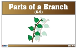 Parts of a Branch Nomenclature Cards 6-9 (Print)