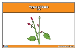 Type of Buds Nomenclature Cards 3-6 (Printed)
