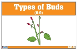 Type of Buds Nomenclature Cards 6-9 (Printed)