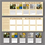 Montessori Materials: Kingdom Charts/ Fungus