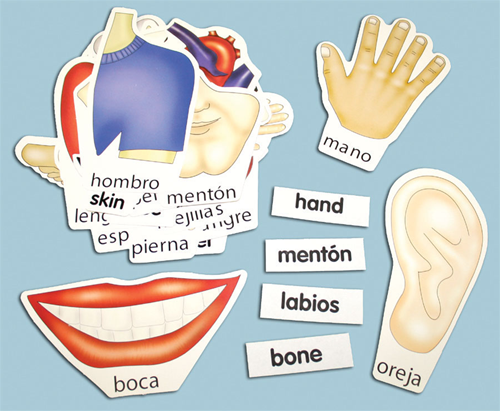 Spanish Label Cards (Body Parts)
