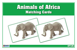 Animals of Africa Matching Cards