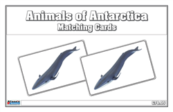 Animals of Antarctica Matching Cards