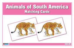 Animals of South America Matching Cards