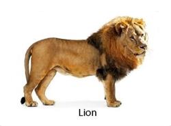 Picture Matching Cards - Wild Animals (Printed and Laminated)