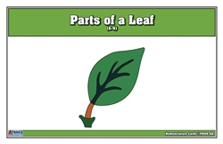 Parts of a Leaf Puzzle Nomenclature Cards (6-9)