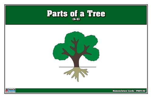 Parts of a Tree Puzzle Nomenclature Cards (6-9)