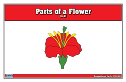 Parts of a Flower Puzzle Nomenclature Cards(6-9)