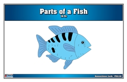 Parts of a Fish Puzzle Nomenclature Cards (6-9)