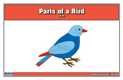 Parts of a Bird Puzzle Nomenclature Cards (3-6)