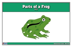 Parts of a Frog Puzzle Nomenclature Cards (6-9)