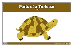 Parts of a Tortoise Puzzle Nomenclature Cards (6-9)