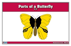 Parts of a Butterfly Puzzle Nomenclature Cards (6-9)
