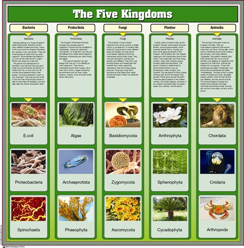 montessori materials the five kingdoms chart with cards. Black Bedroom Furniture Sets. Home Design Ideas