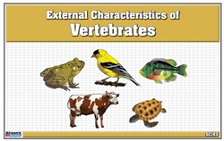 Classified Nomenclature of External Parts of Vertebrates