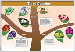 The Three Domains