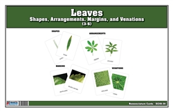 Types of Leaves Nomenclature Cards (Printed)
