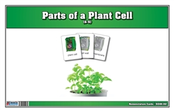 Parts of a Plant Cell Nomenclature Cards 6-9