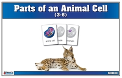 Parts of an Animal Cell Nomenclature Cards 3-6 (Printed)