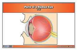 Parts of a Human Eye (3-6)