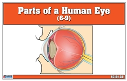 Parts of a Human Eye (6-9)