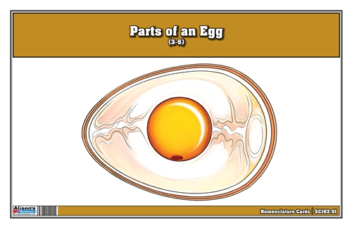 Parts of an Egg Nomenclature Cards (3-6)