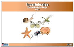 Invertebrates Classification Nomenclature Cards (Printed)