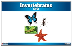 Montessori Materials-Invertebrates Nomenclature Cards