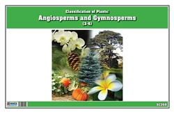 Montessori Materials: Nomenclature Cards (3-6) Classification of Plants: Angiosperms and Gymnosperms