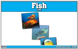 Fish Nomenclature Cards (printed)