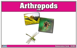 Arthropods Nomenclature Cards (Printed)