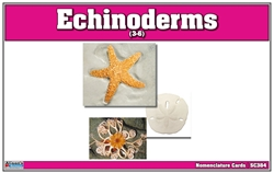 Echnioderms Nomenclature Cards (Printed)