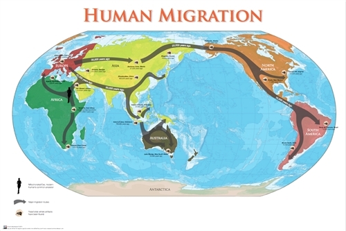 human migration This animated map shows how early migrants from africa populated the planet.