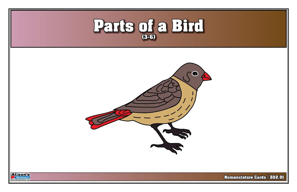 parts of a birds nomenclature cards 3 6 printed