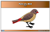 Parts of a Birds Nomenclature Cards (6-9) Printed