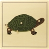 Parts of a Turtle Puzzle