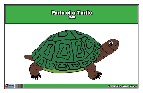 Parts of a Turtle Nomenclature Cards (3-6) Printed